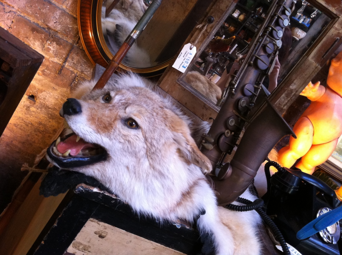 Ferocious looking wolf hide - Seasonal Concepts - 122 Redfern Street Redfern