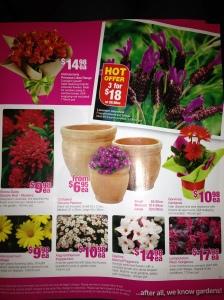 Catalogue Marketing Strategy - Serenity Nursery